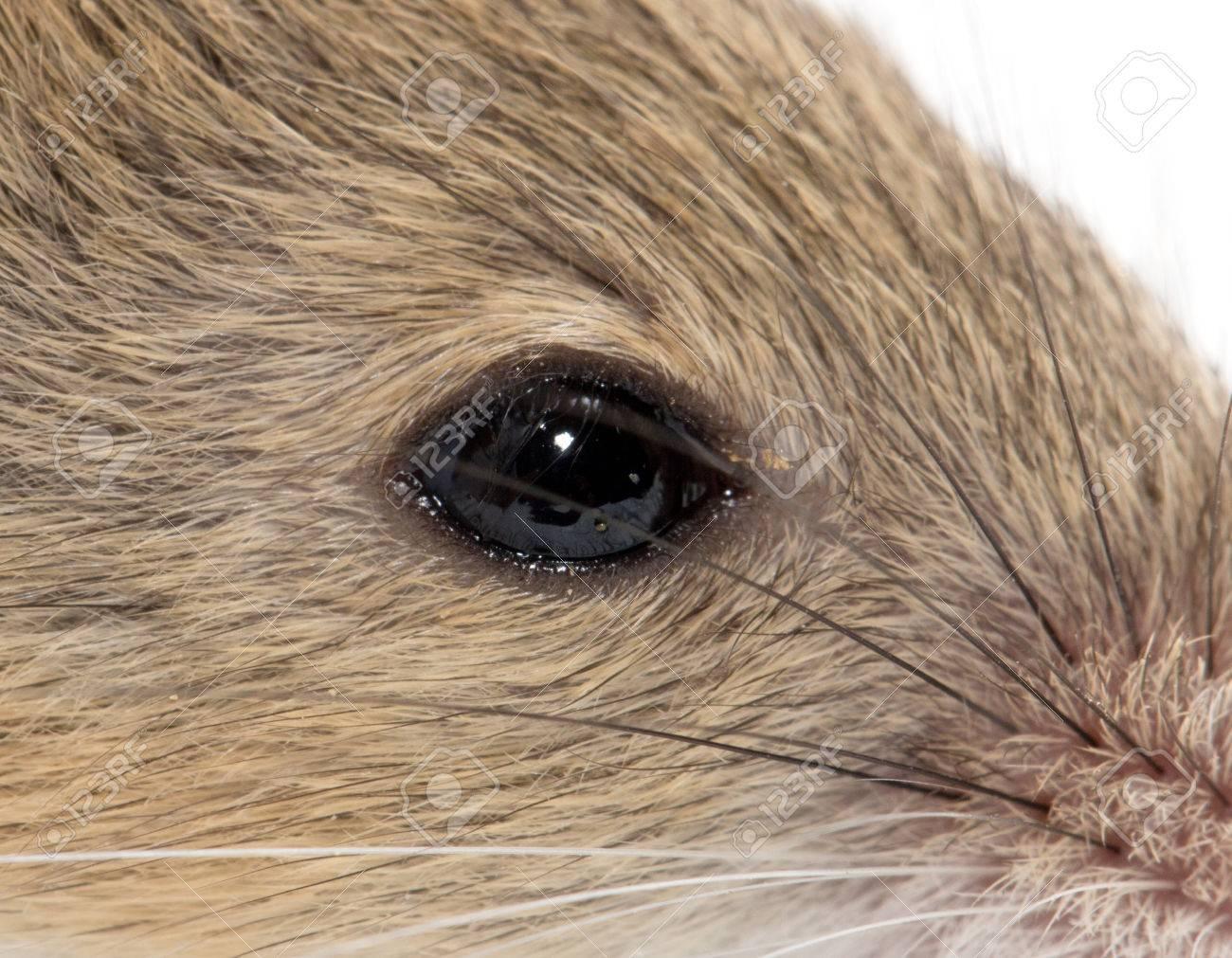 eye mouse  macro