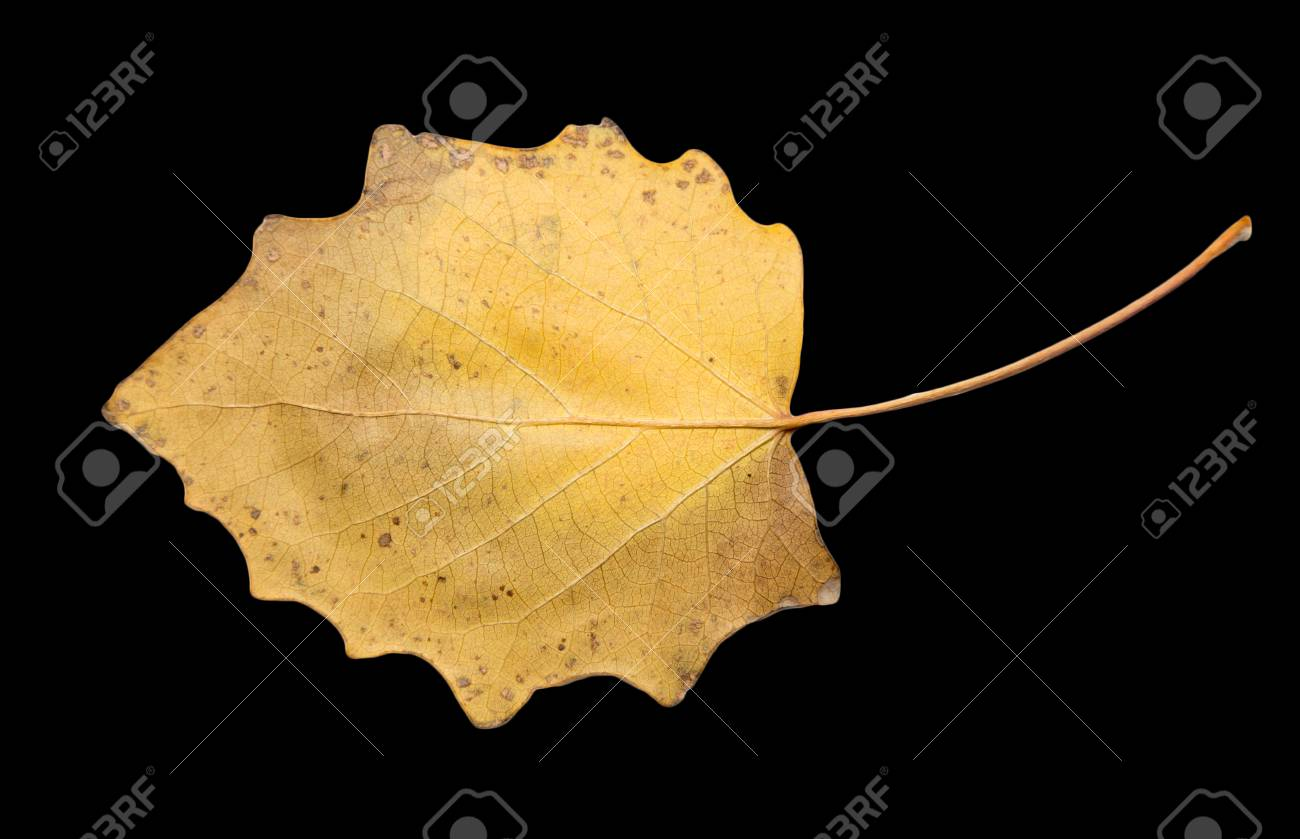 autumn leaf on a black background Stock Photo - 24103615