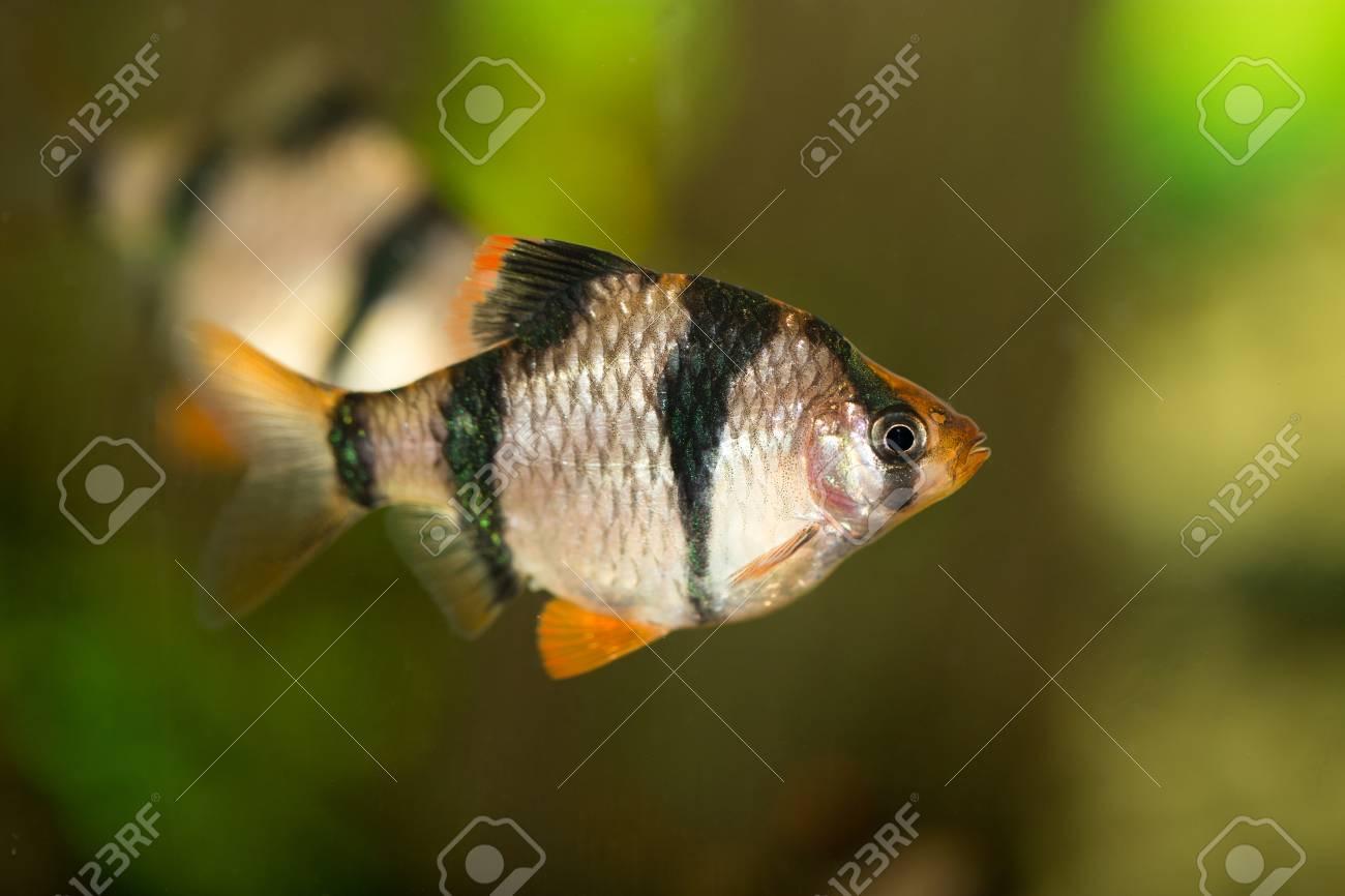 fish in the aquarium Stock Photo - 28356053