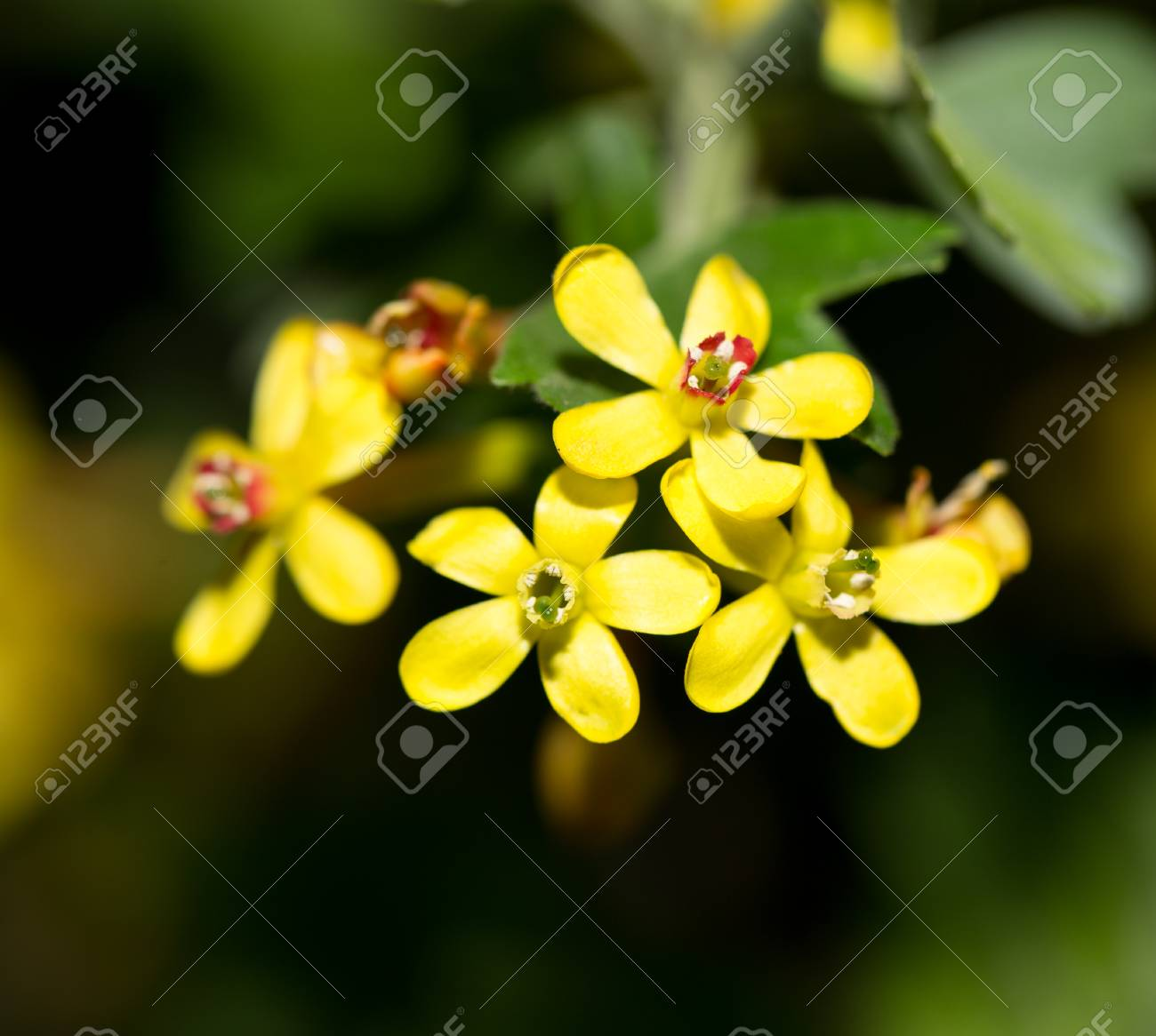 Little yellow flowers topsimages beautiful little yellow flowers in nature macro stock photo jpg 1300x1166 little yellow flowers izmirmasajfo
