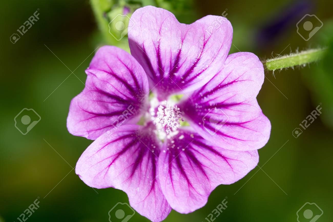 Beautiful purple flower in nature stock photo picture and royalty beautiful purple flower in nature stock photo 63265586 izmirmasajfo