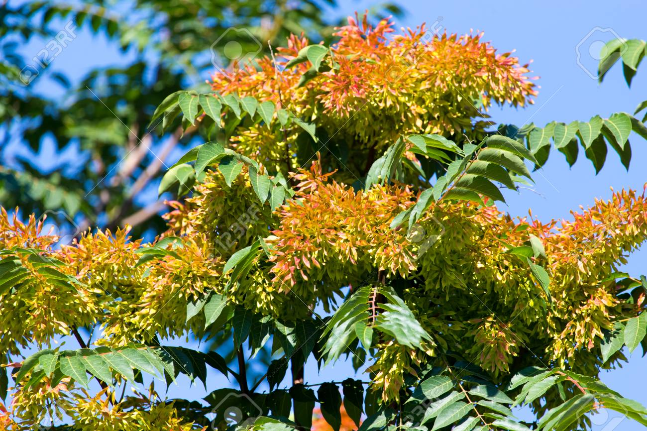 Orange Flowers On The Tree In Nature Stock Photo Picture And