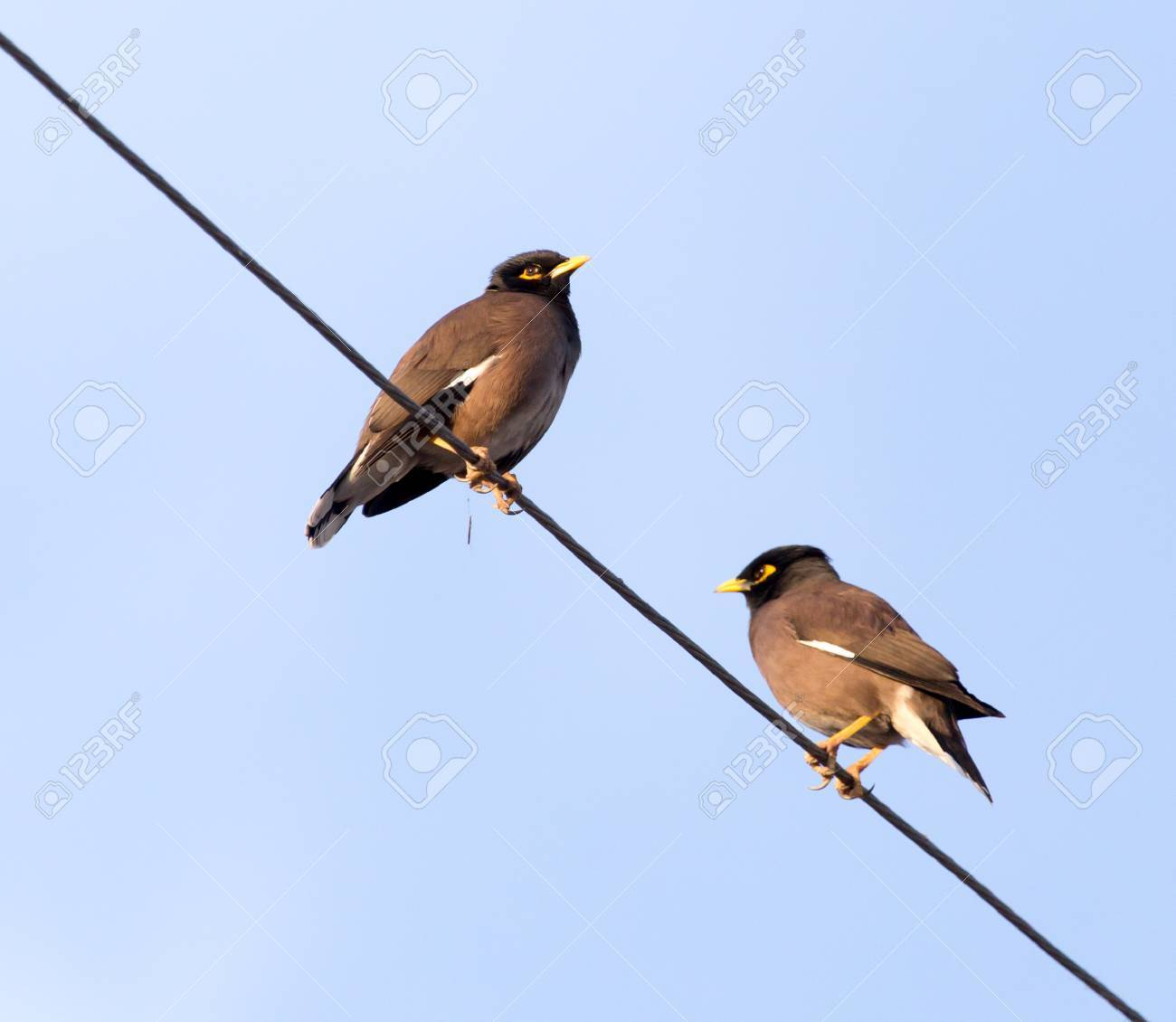 Two Birds On A Wire Against The Sky Stock Photo Picture And Royalty