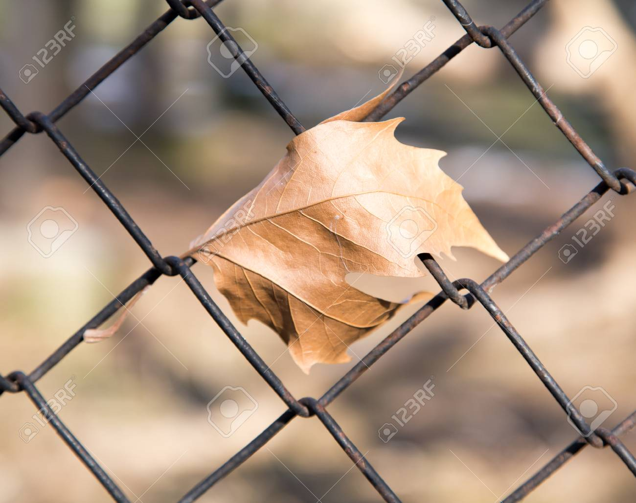Leaves On The Wire Fence Stock Photo, Picture And Royalty Free ...