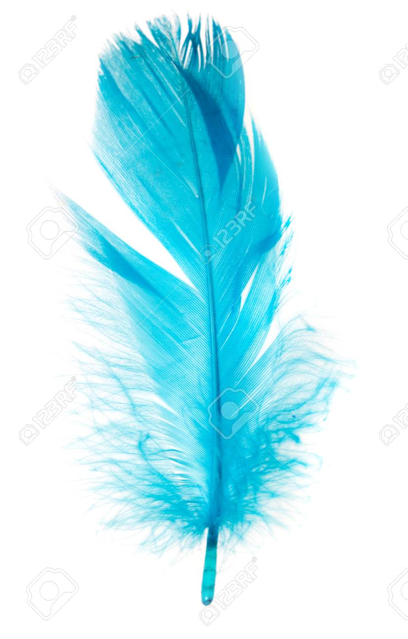 Beautiful Blue Feather On A White Background Stock Photo Picture And Royalty Free Image Image 97006548