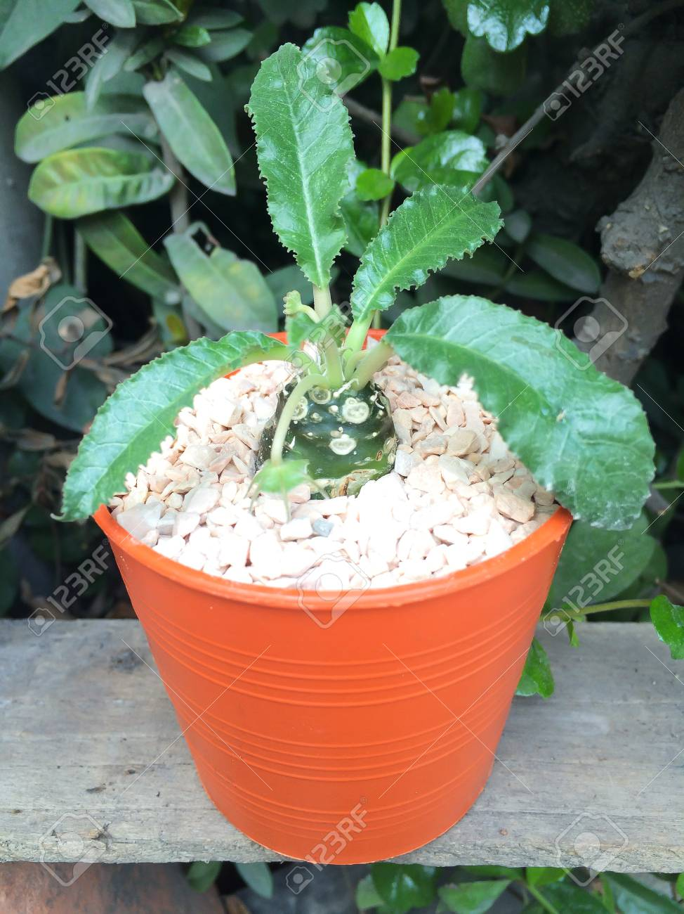 Petite Cacrus Decorative Dans Un Petit Pot La Position Superieure