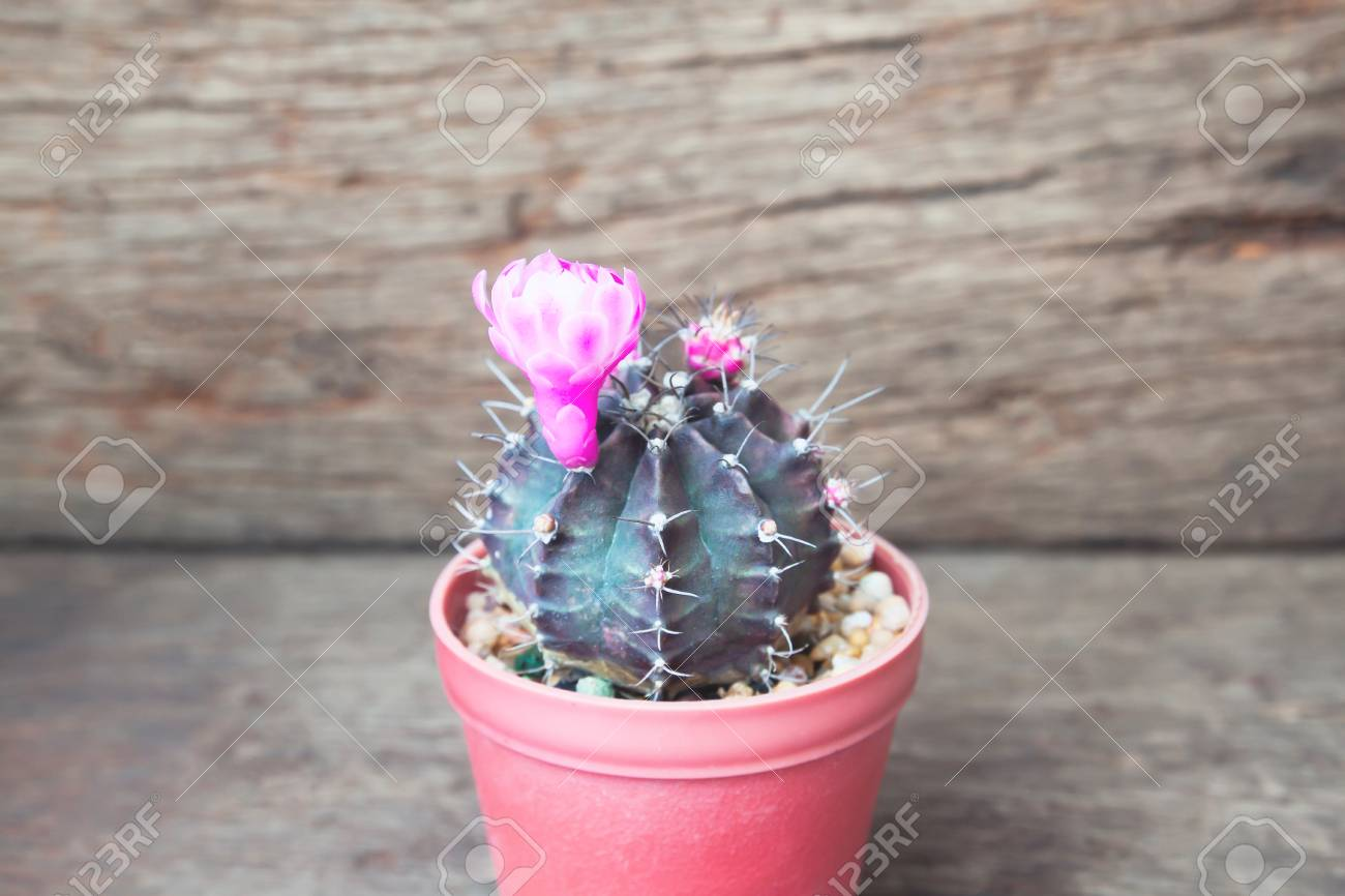 Cactus With Pink Flowers On Rustic Wooden Background Stock Photo