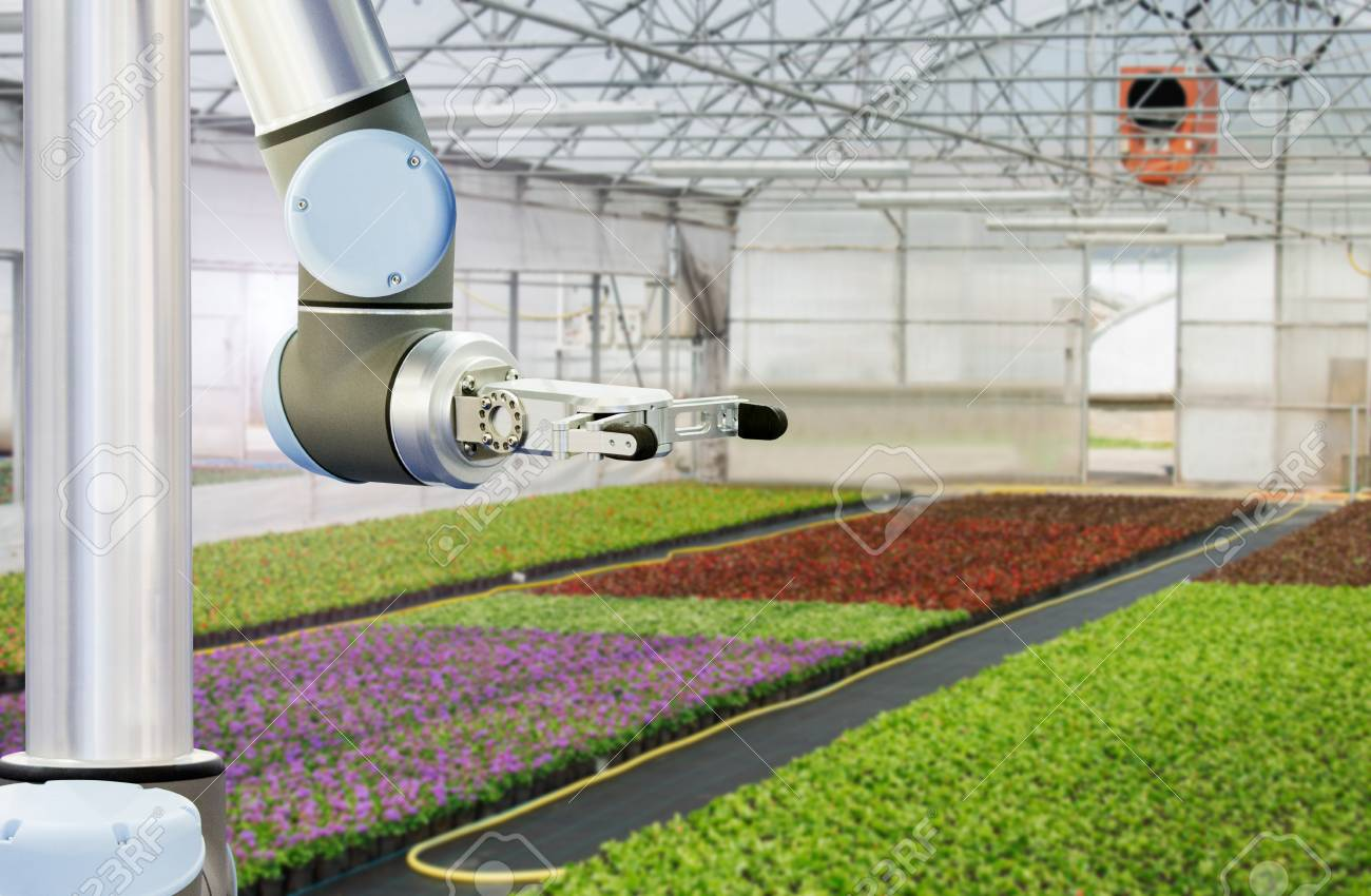 The robot arm is working in a greenhouse  Smart farming and digital