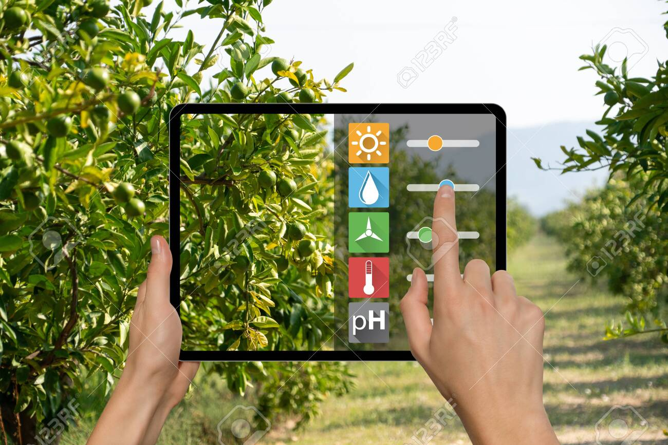 A farmer is holding a tablet  Smart farming and digital agriculture