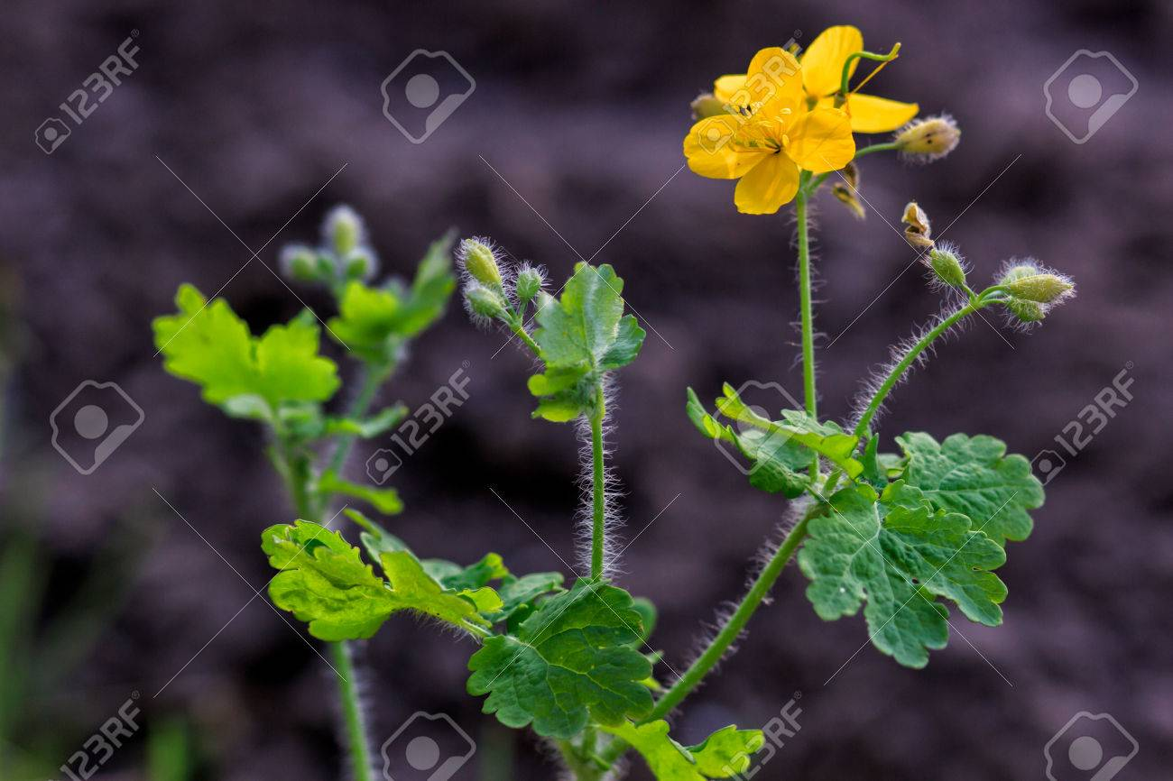 Pequenas Flores Silvestres Amarillas Florecen Al Aire Libre