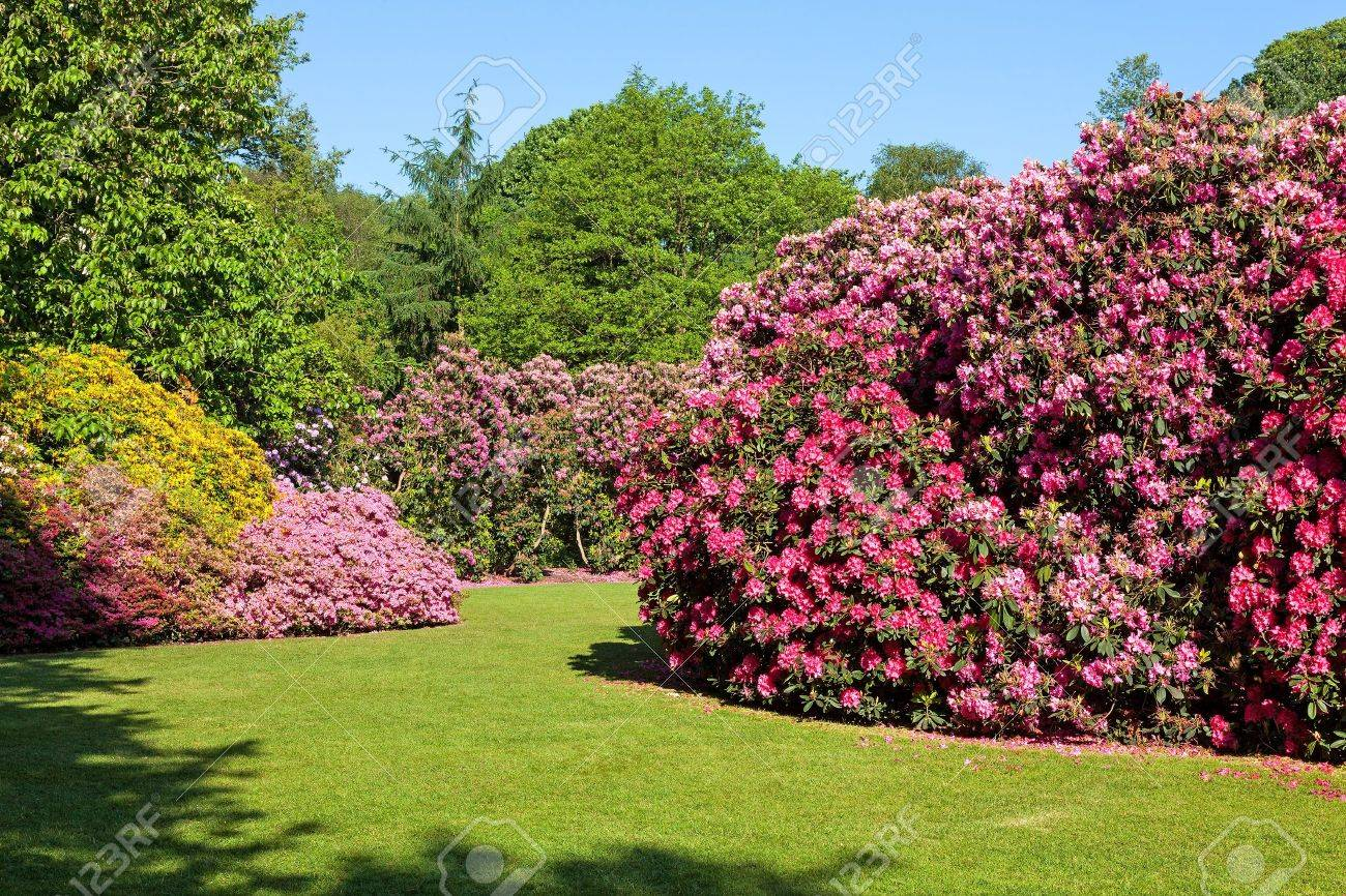 Rhododendron And Azalea Bushes In Beautiful Summer Garden In