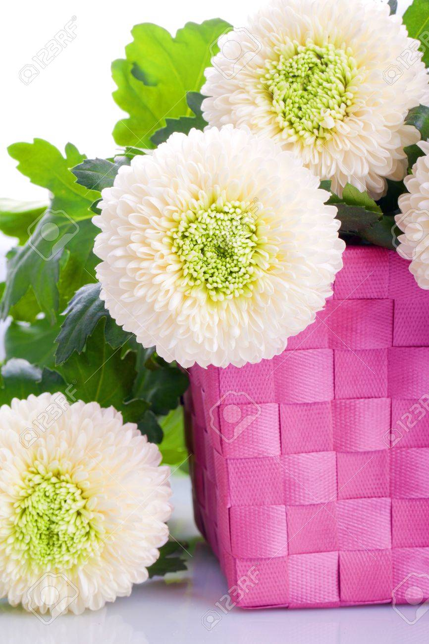 White Marigold Flower Bouquet In A Pink Box Stock Photo Picture And