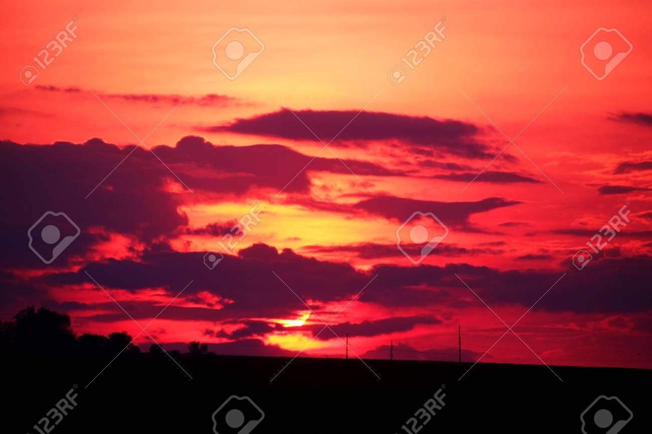 Purple Sunset - 58113170