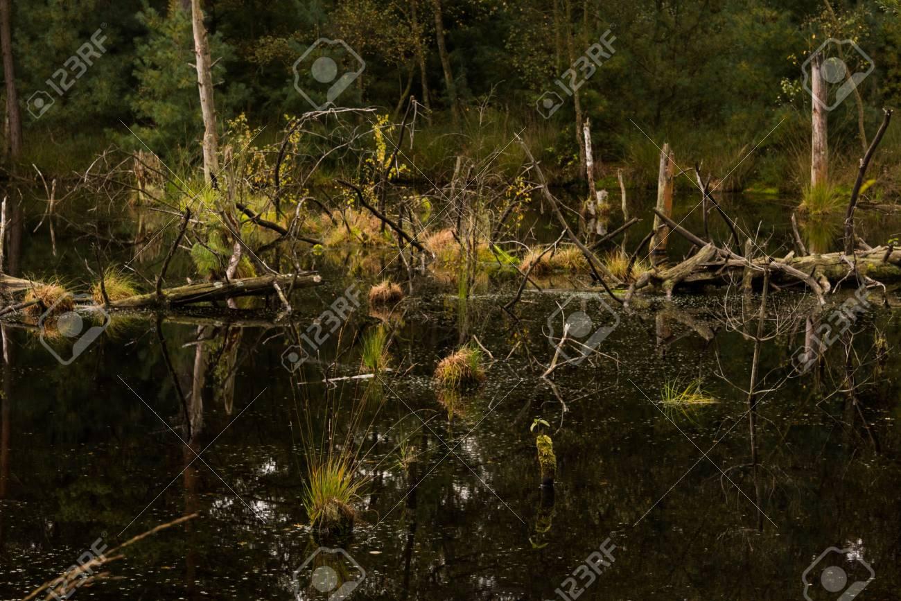 沼の上を見るし、ドイツのリューネブルク ・ ヒースに湿地の沼地 の ...