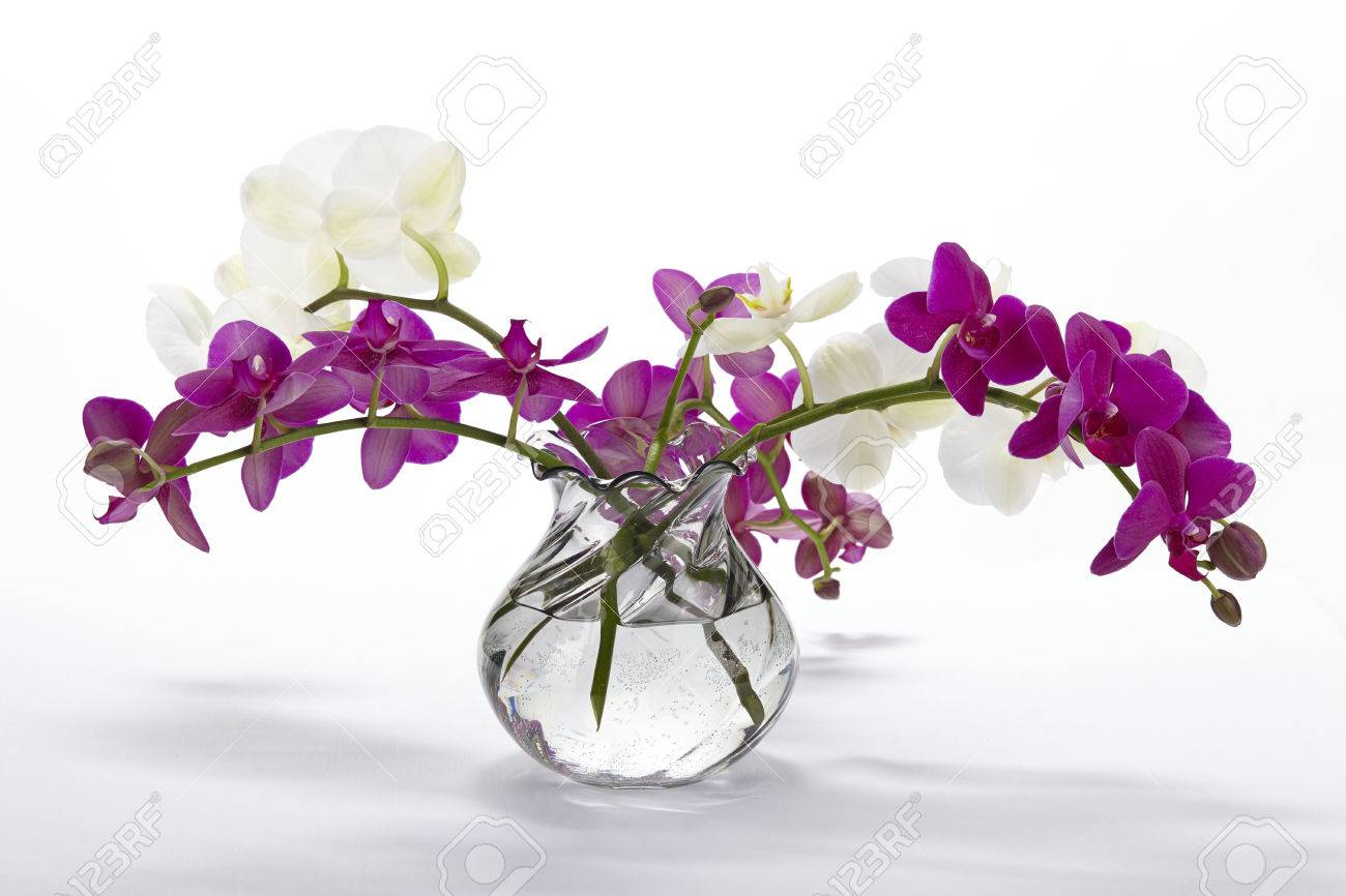 A bouquet of white and purple orchids in a vase stock photo a bouquet of white and purple orchids in a vase stock photo 25258182 reviewsmspy
