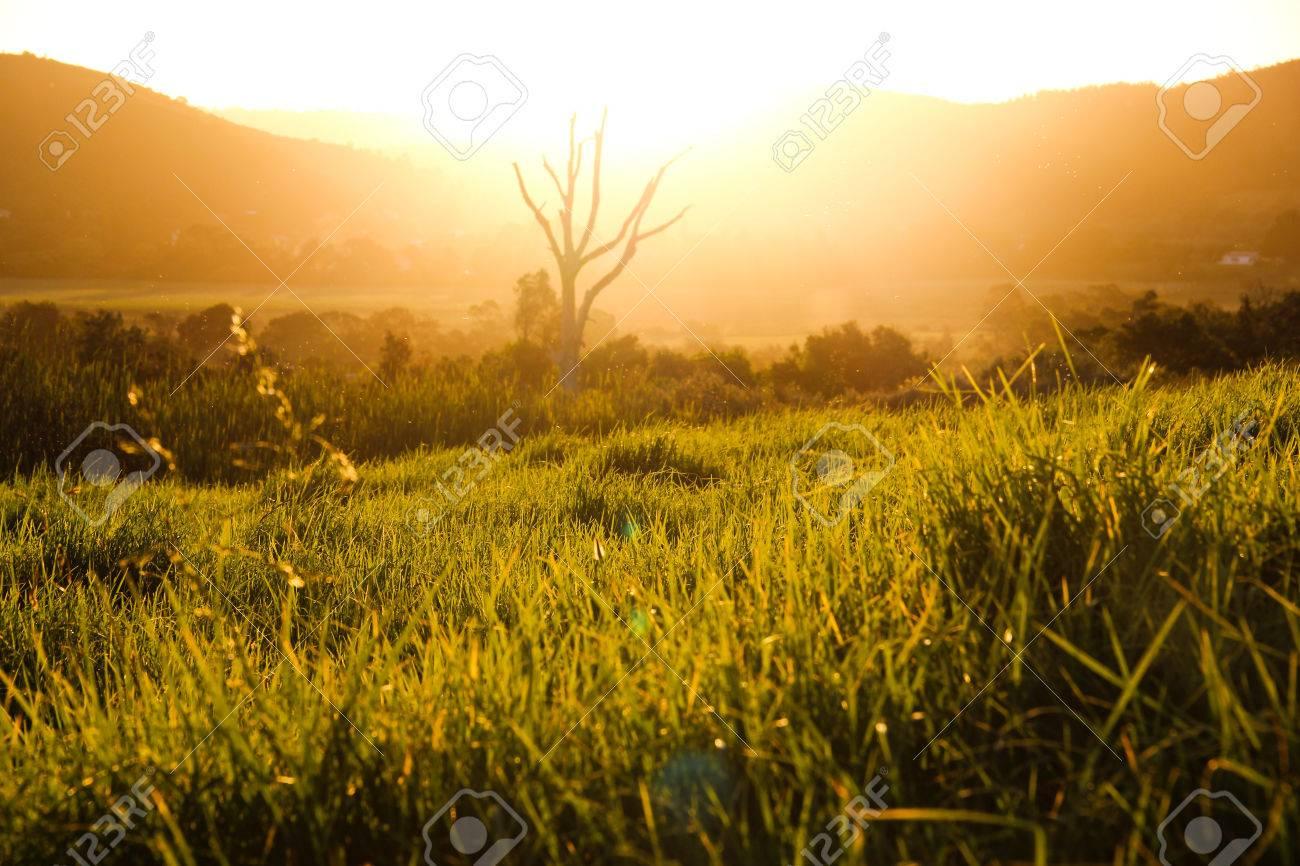 tall grass field sunset 123rfcom tall grass field sunset grass field sunset stock photo picture and royalty free image