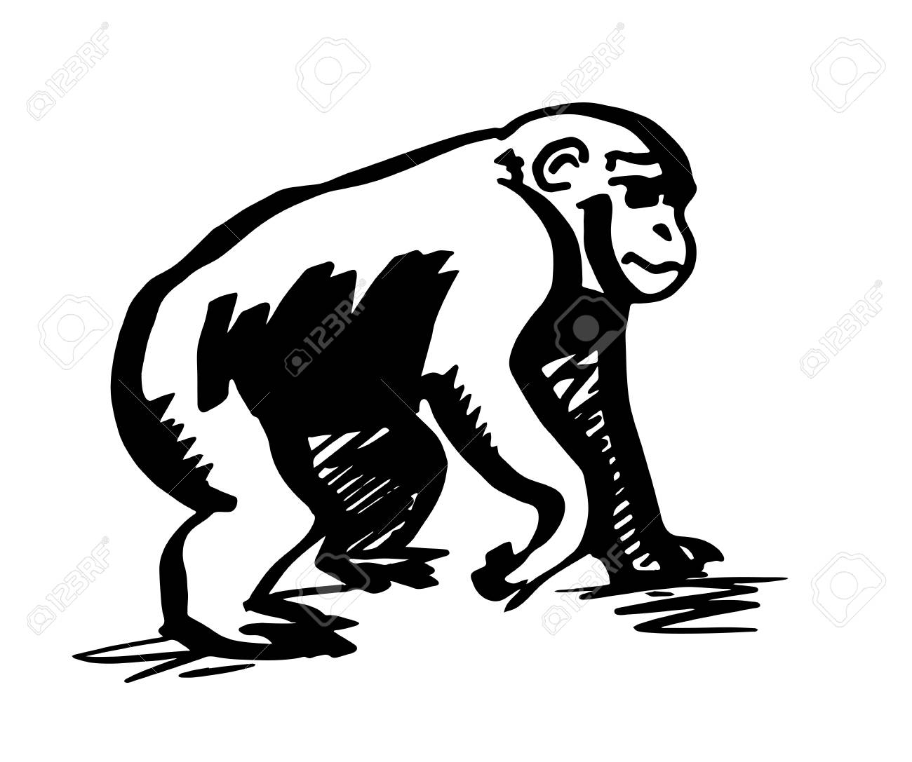 chimpanzee monkey silhouette line drawing royalty free cliparts