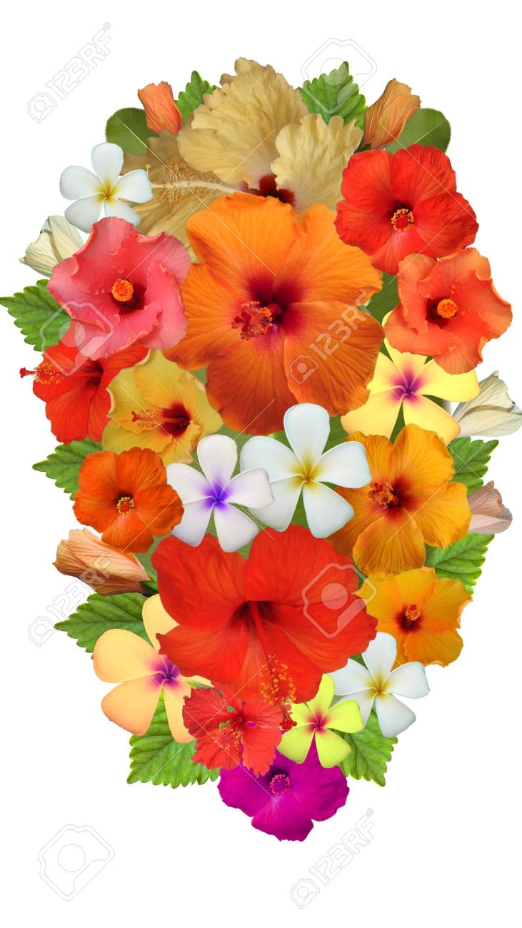 Hibiscus Flower Arrangement Stock Photo Picture And Royalty Free