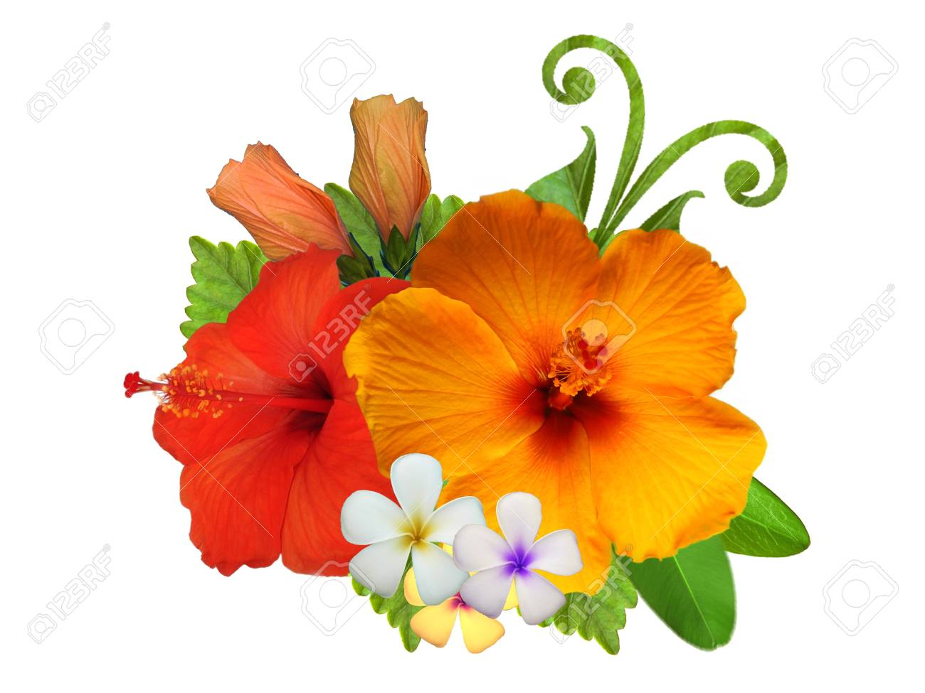 Hibiscus Flowers In Different Colors Stock Photo Picture And