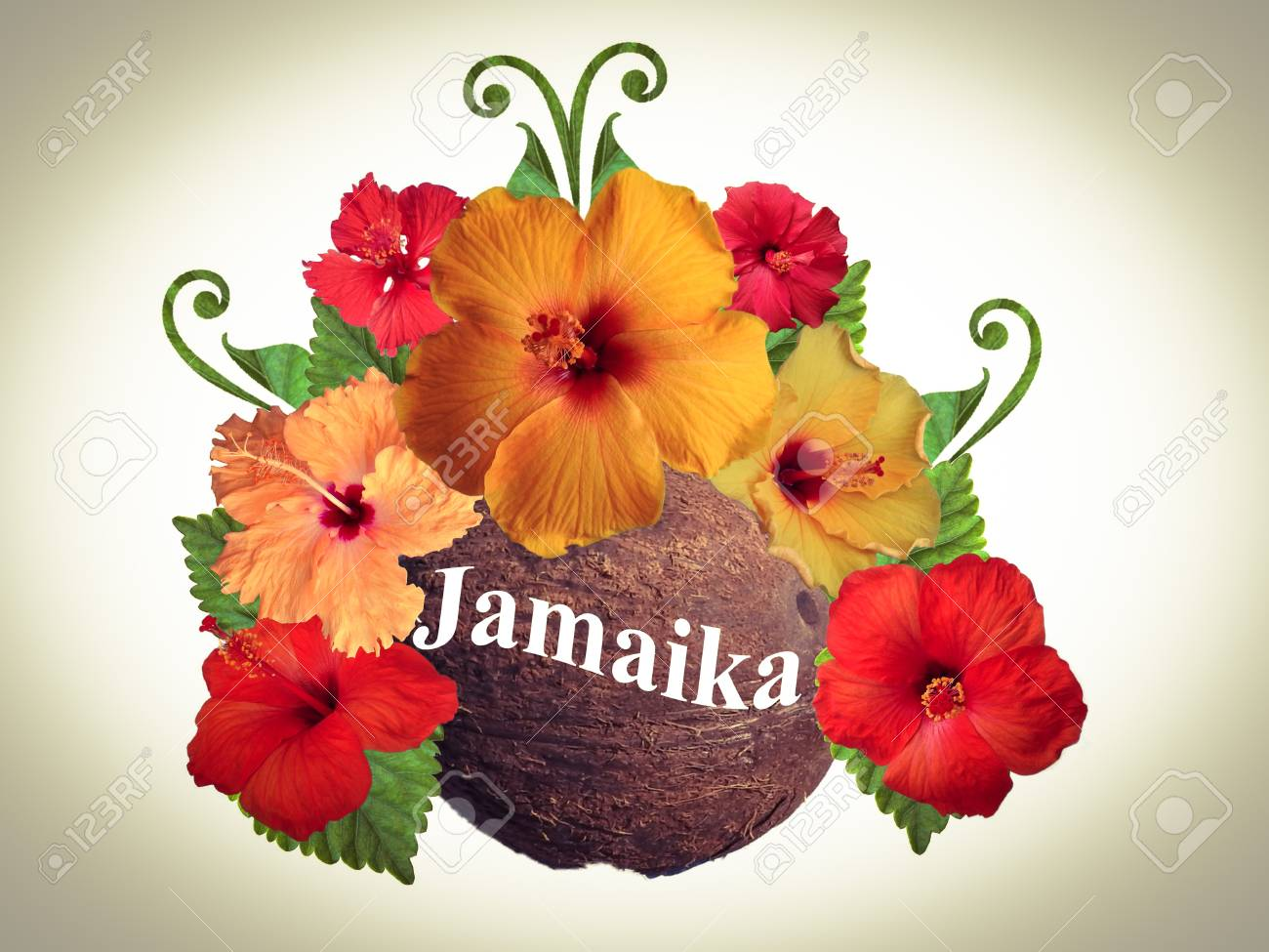 Hibiscus Flowers In Different Colors Stock Photo, Picture And ...