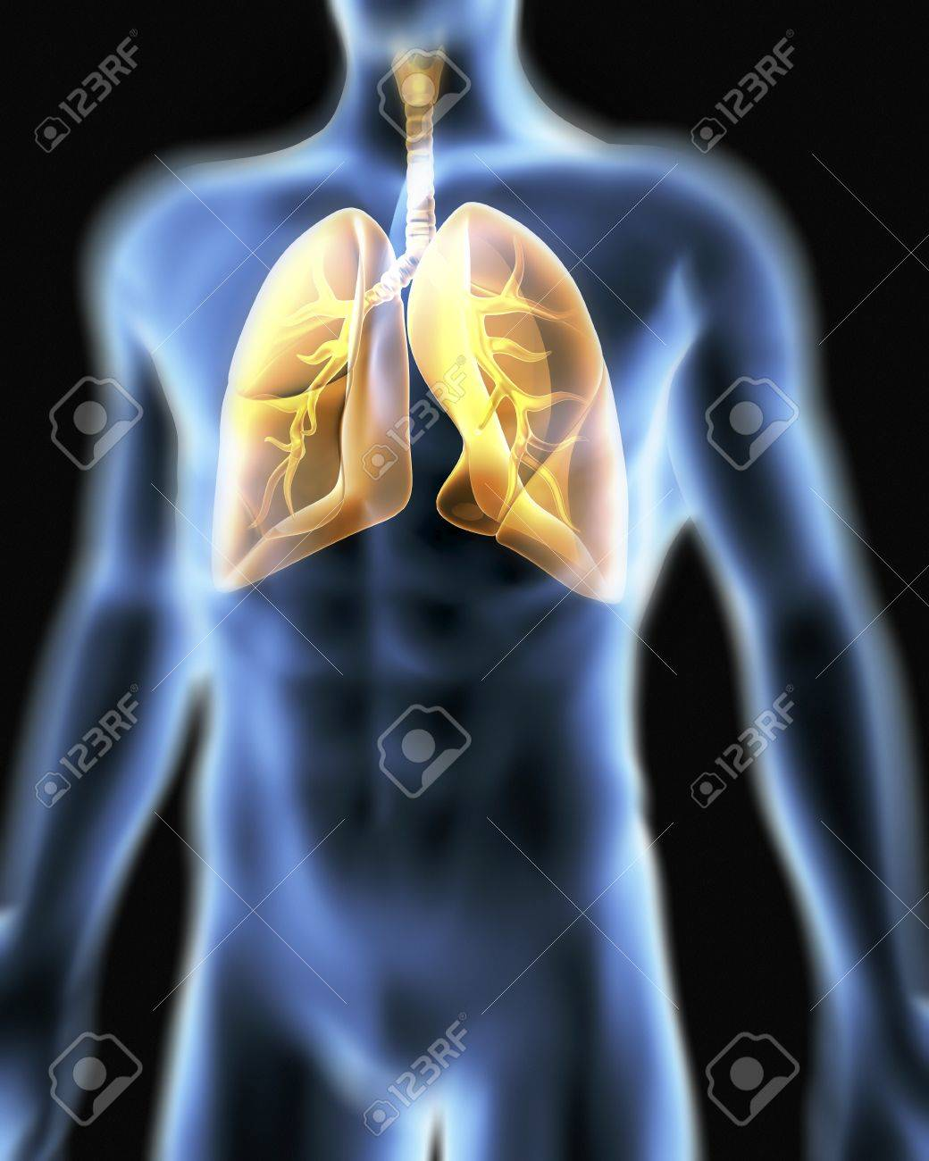 Respiratory systemputer artwork of a male torso and the computer artwork of a male torso and the respiratory systemshowing lungs ccuart Image collections