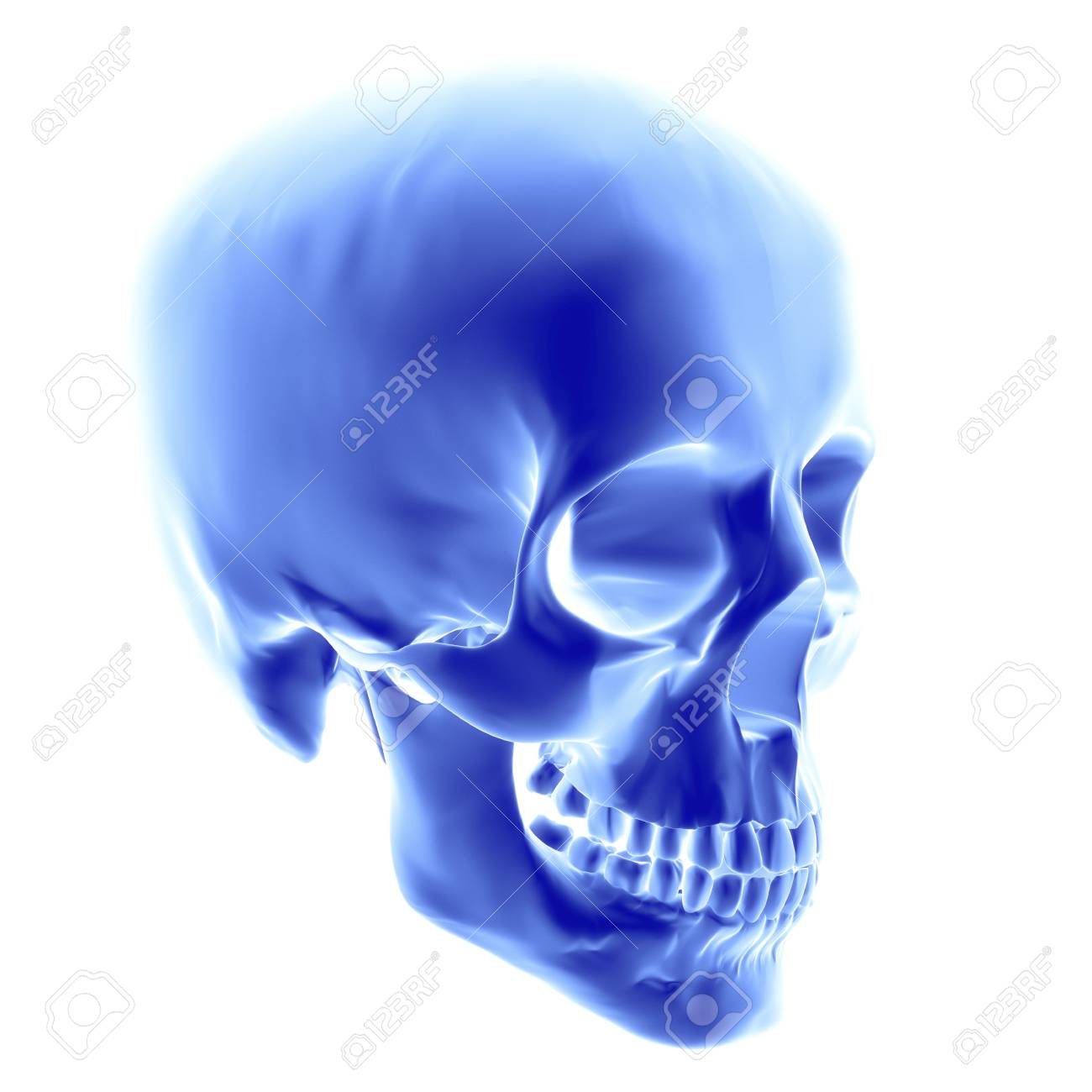 Skullputer Artwork Of An Opaque View Of A Human Skull Adult