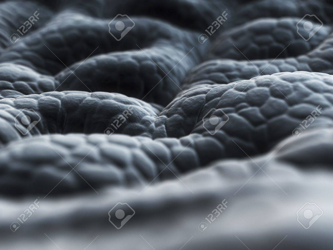 Stomach Liningartwork Stock Photo Picture And Royalty Free Image