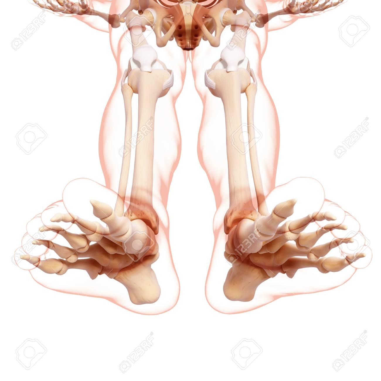 Human Leg Bonescomputer Artwork Stock Photo Picture And Royalty