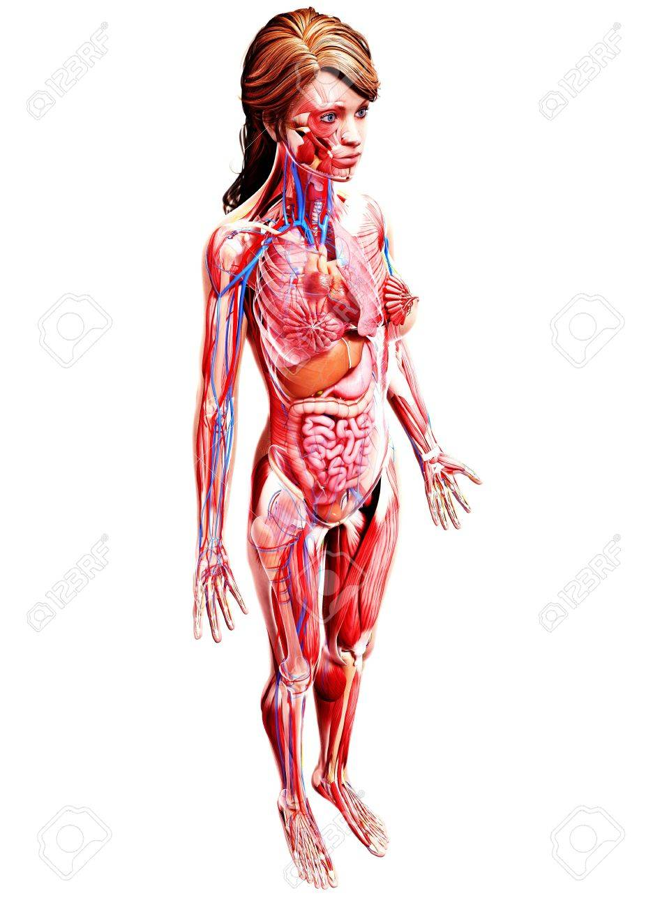 Female Anatomy,computer Artwork Stock Photo, Picture And Royalty ...