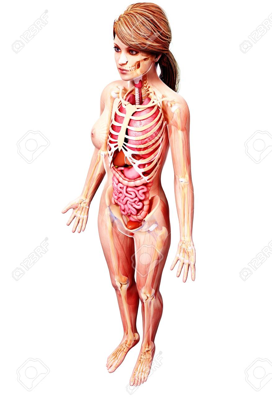 Female Anatomyartwork Stock Photo Picture And Royalty Free Image