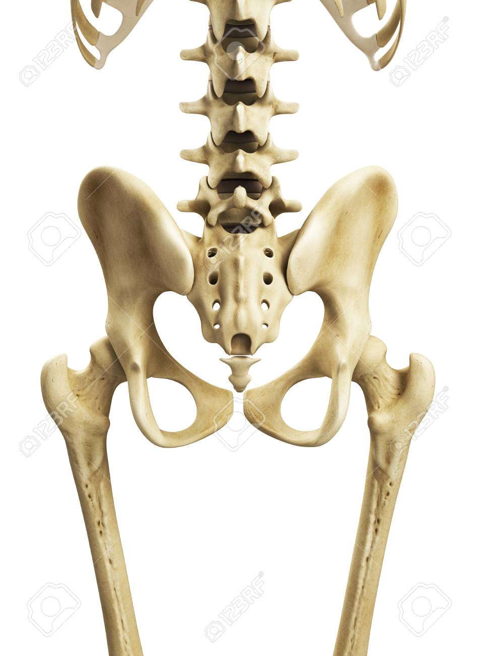 Hip Bonesartwork Stock Photo Picture And Royalty Free Image Image