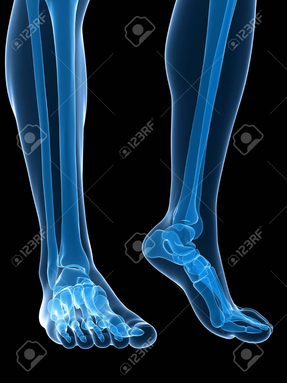 Bones Of The Feet,artwork Stock Photo, Picture And Royalty Free ...