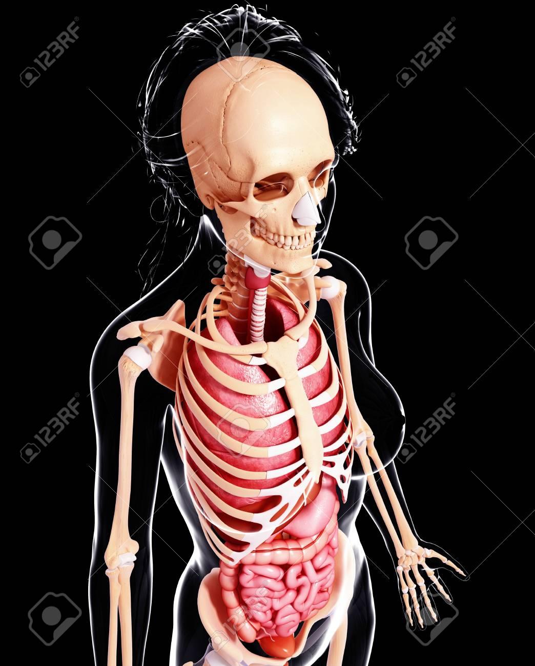 Groß Pic Der Weiblichen Anatomie Des Menschen Ideen - Menschliche ...