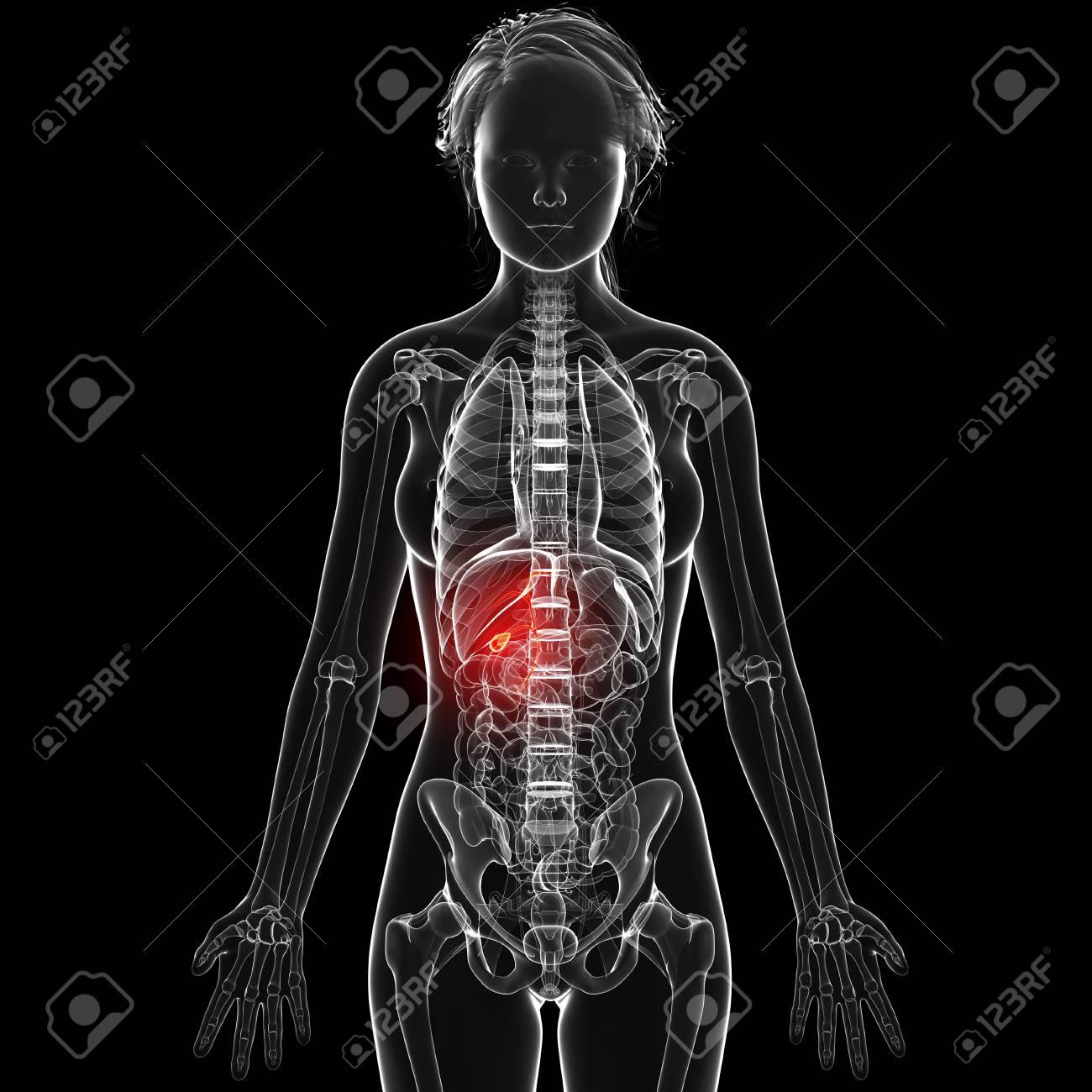 Contemporáneo Referencia Anatomía Femenina Modelo - Anatomía de Las ...