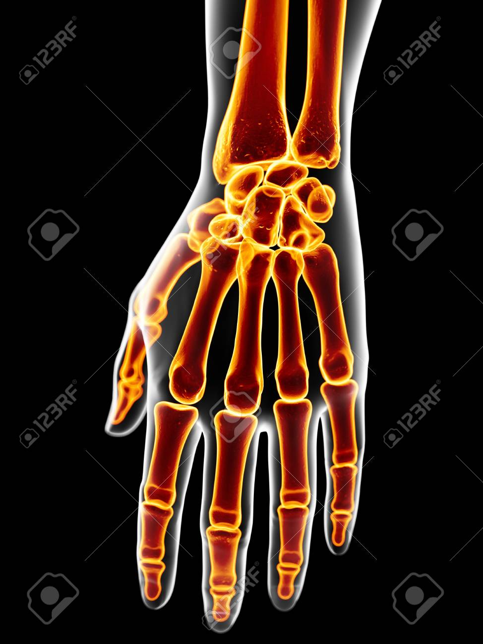 Human Hand Bones, Artwork Stock Photo, Picture And Royalty Free ...