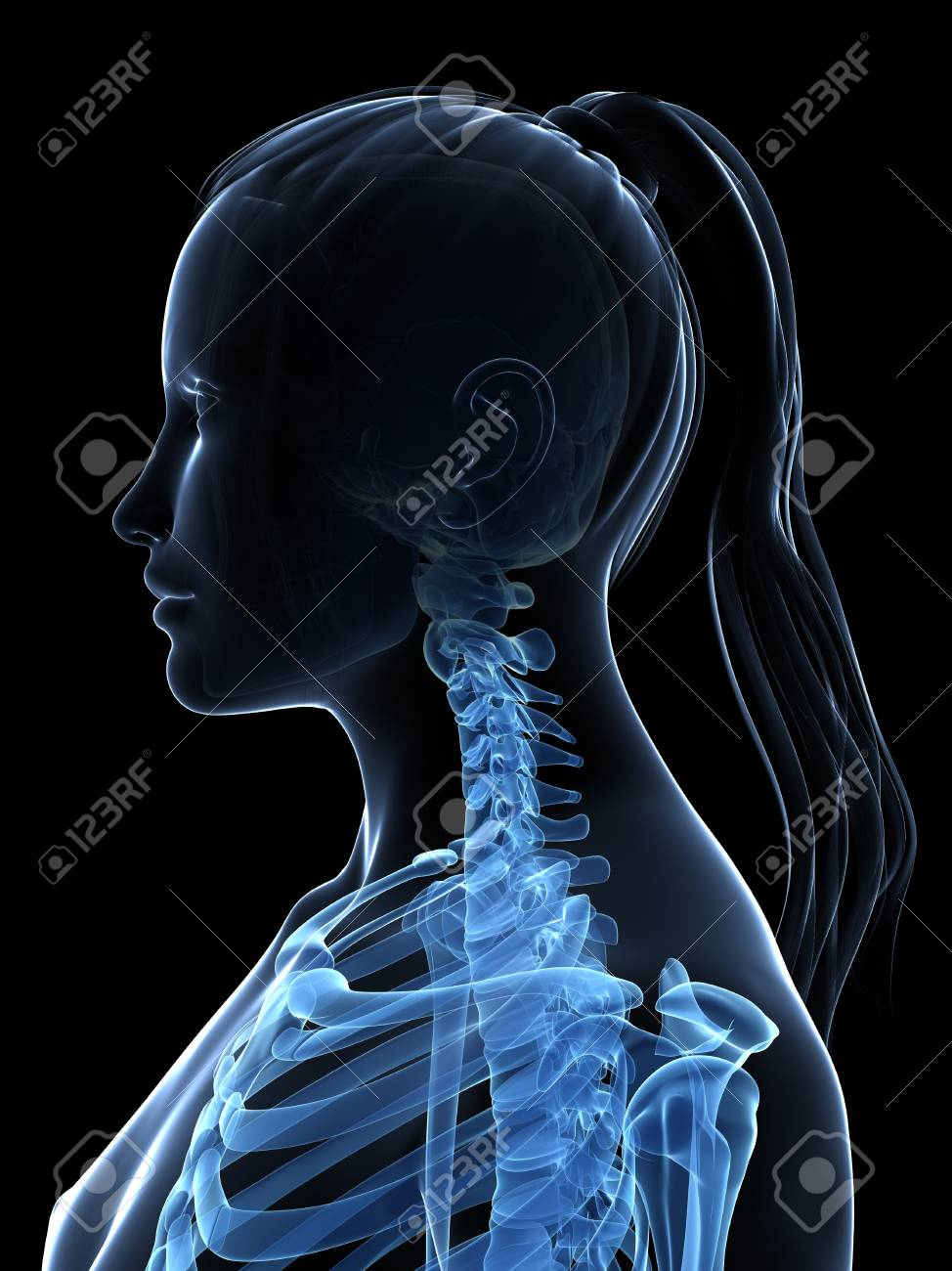 Female Neck Bones Artwork Stock Photo Picture And Royalty Free