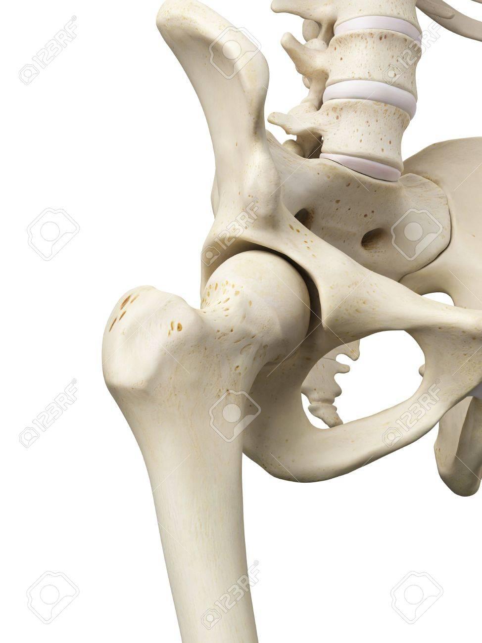 Ziemlich Das Hüftgelenk Anatomie Fotos - Anatomie Ideen - finotti.info