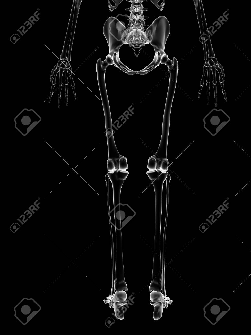 Human Leg Bones Illustration Stock Photo Picture And Royalty Free