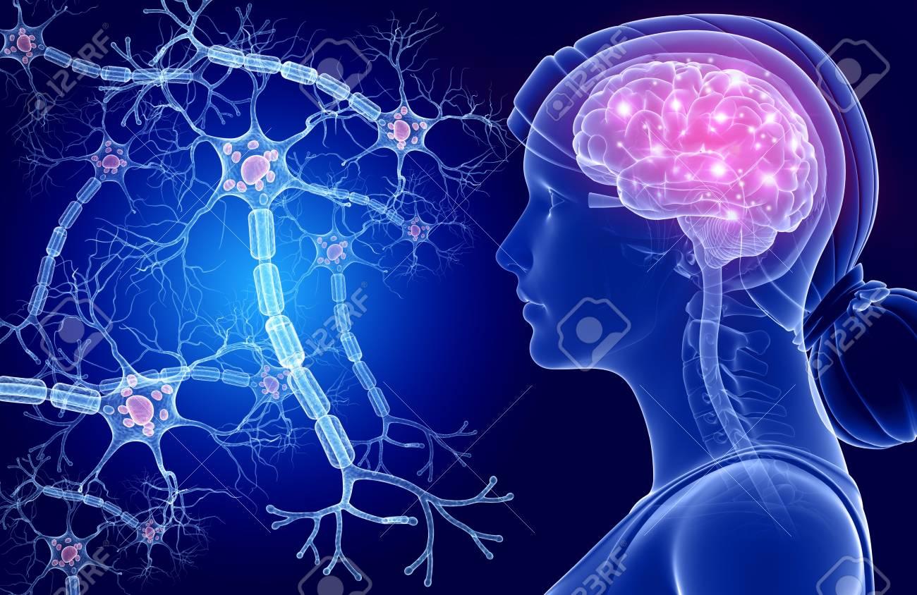 Excelente Células Nerviosas Ideas - Imágenes de Anatomía Humana ...
