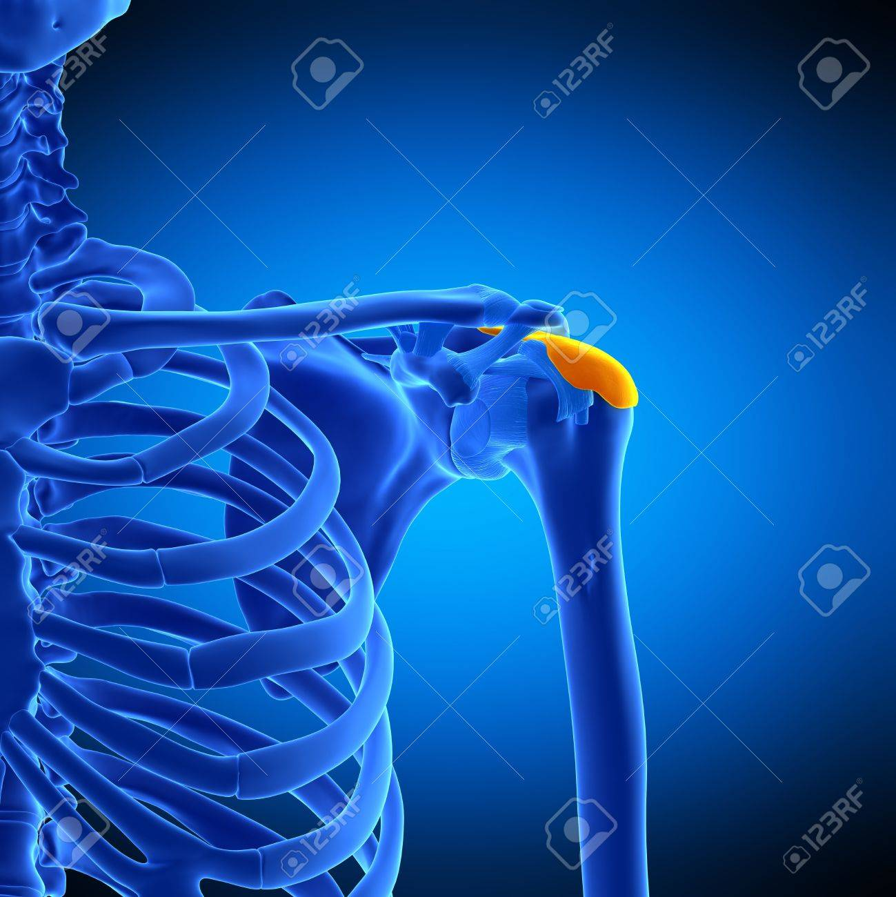 Shoulder Bursa Illustration Stock Photo Picture And Royalty Free