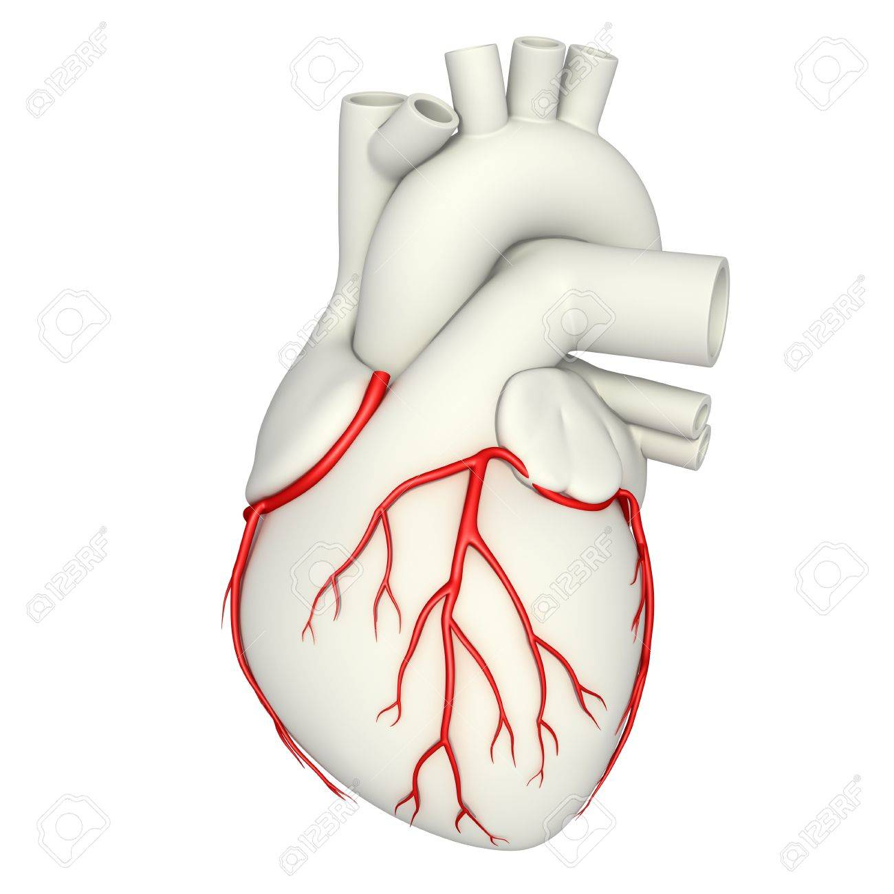 Illustration Of The Heart\'s Coronary Arteries Stock Photo, Picture ...
