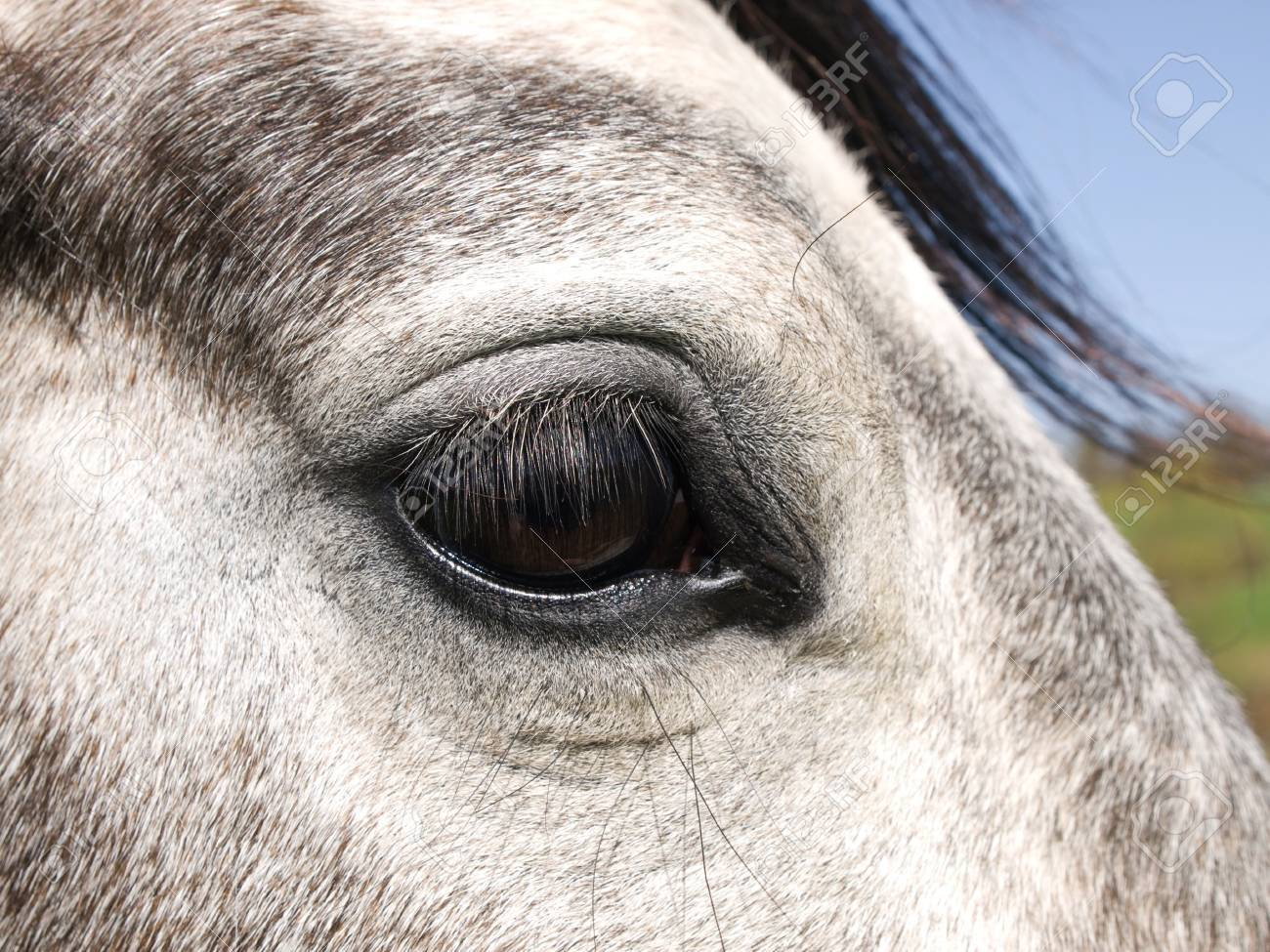 Detail Of White Horse Eye Stock Photo Picture And Royalty Free Image Image 9939423