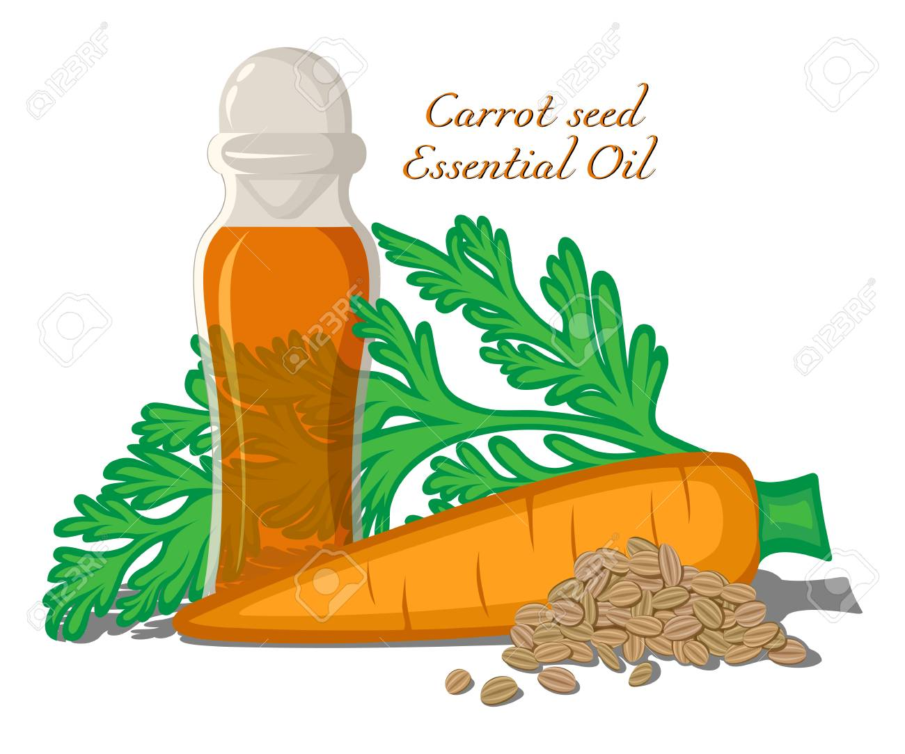 Bottle with essential oil Carrot seeds with leaves, roots and seeds on background - 99970107