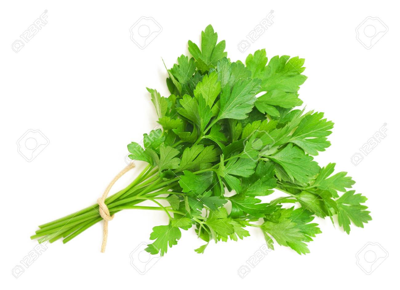 parsley bunch isolated on white background - 41262847