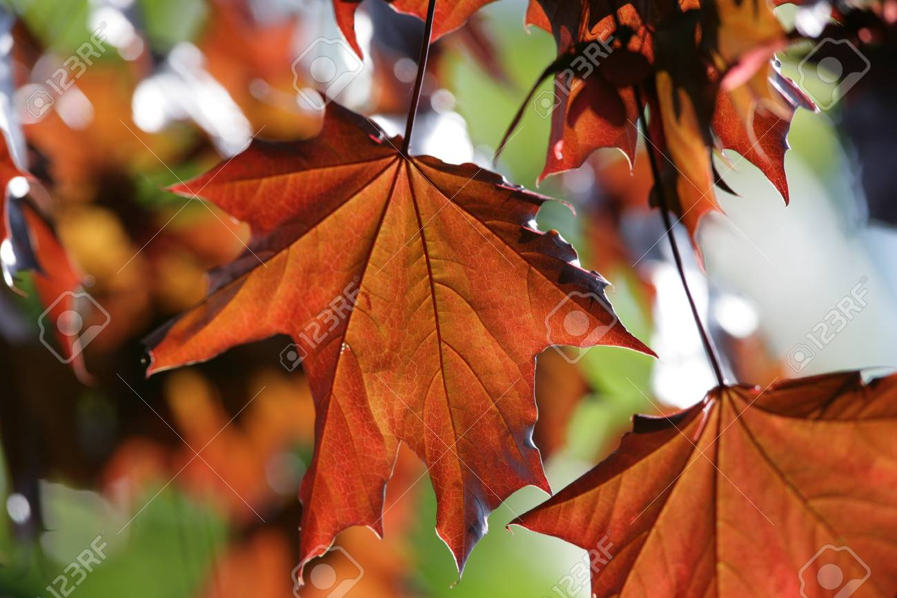 Close up of Autumn leaves Stock Photo - 15381913