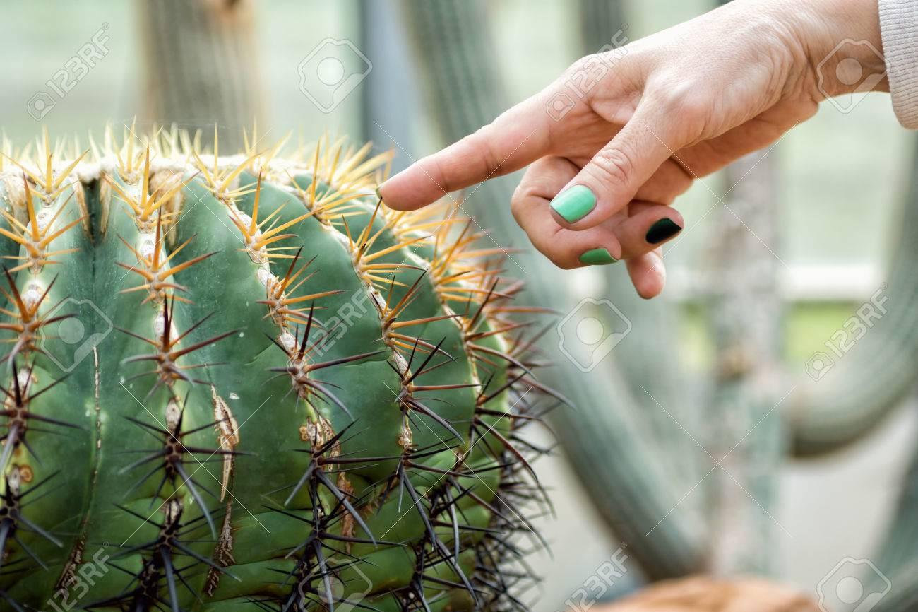 Mujer Dedo Con Esmalte De Uñas Verde Tocando Espina De Cactus ...