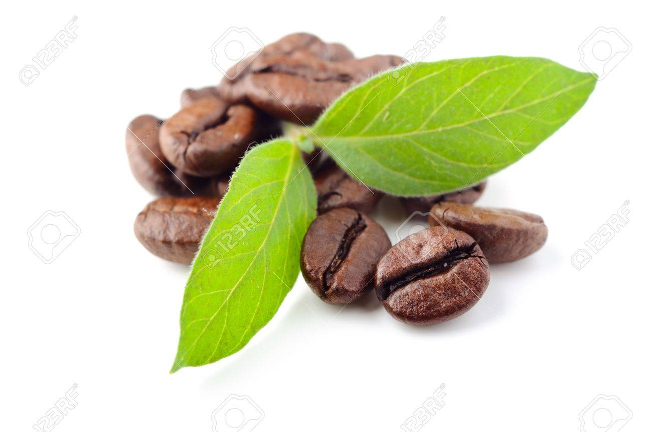 coffee beans and leaf on the white background Stock Photo - 7641305