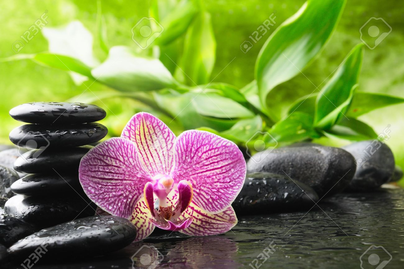 How To Water An Orchid For Caring Plant Ehow