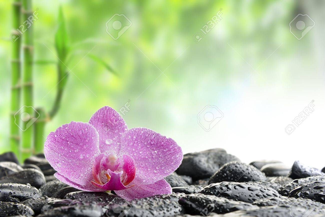 zen stones and  orchid in the water Stock Photo - 8786506