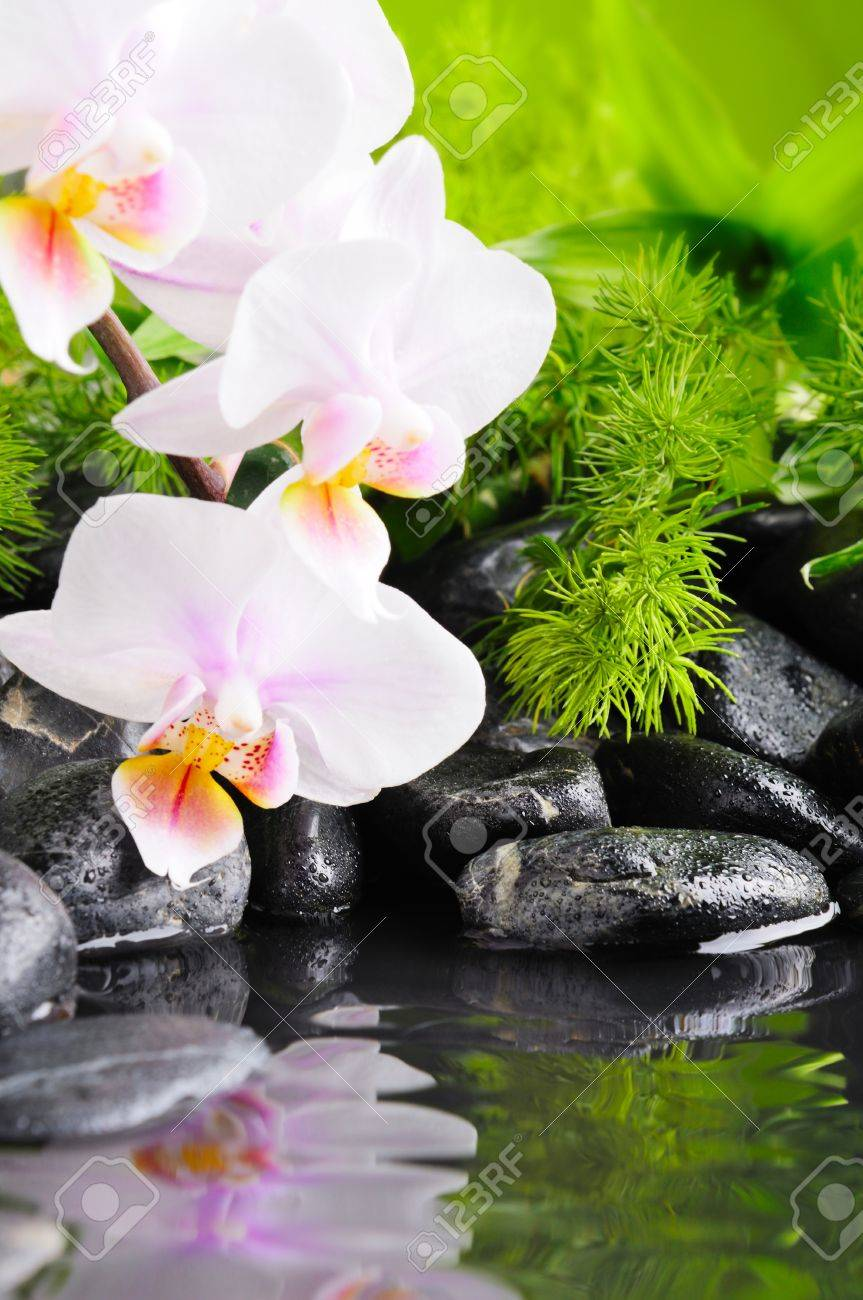 zen basalt stones and orchid with dew Stock Photo - 9184282